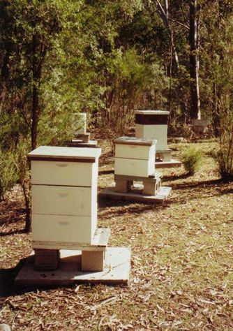 Bee hives on the property